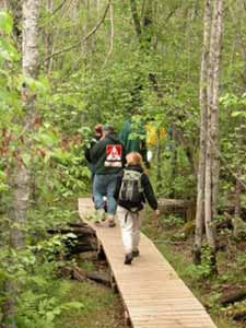 "Image of ""hikers on forest boardwalk"" by Danny Blair, 2003"