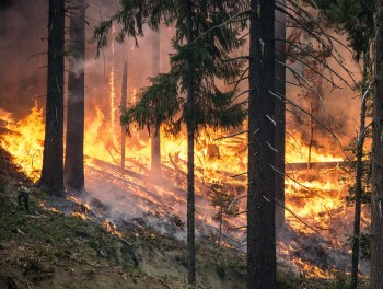 forest fire trees