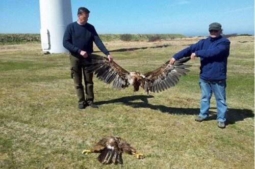 minced eagle wind turbine