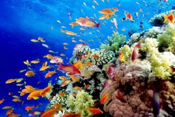 coral reef great barrier