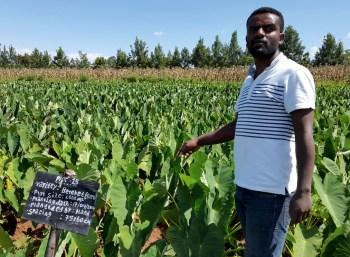 ethiopian crop field