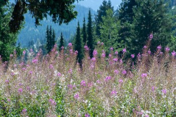 flowers field pollen