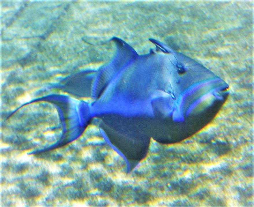 fish wildlife climate change virgin islands