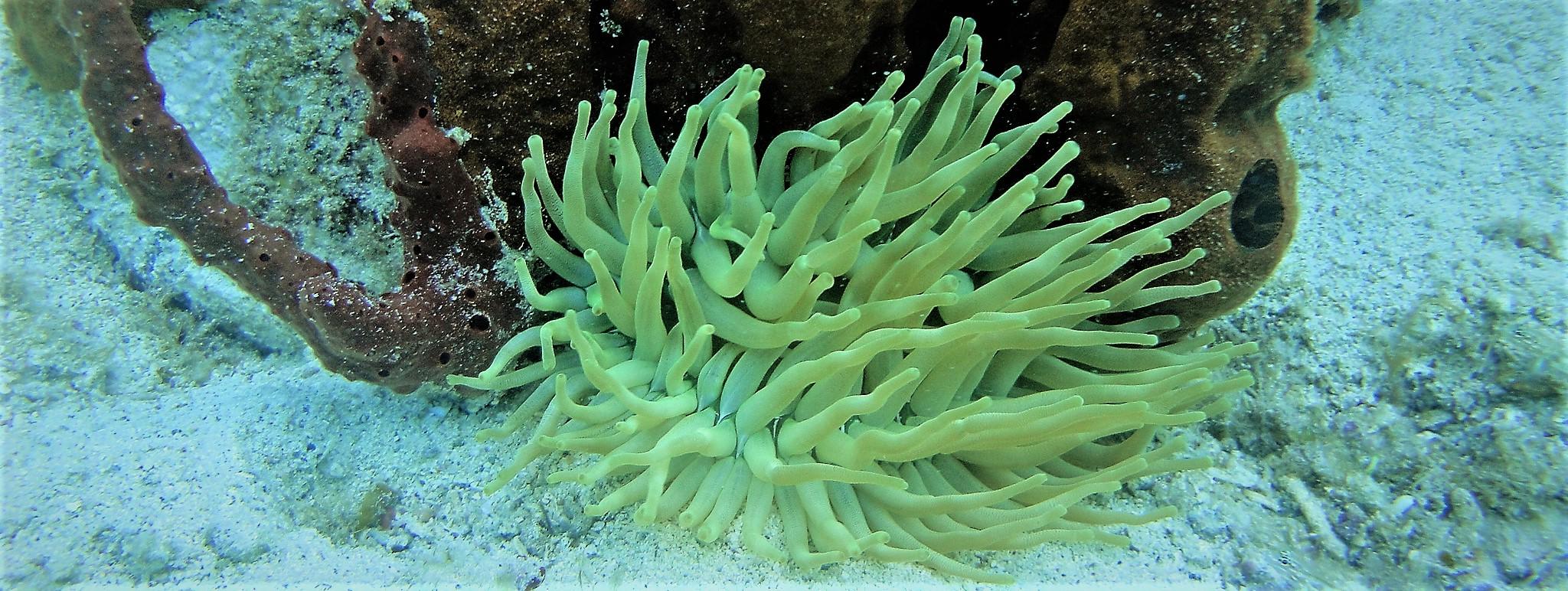 Climate Change Virgin Islands