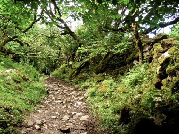 Old Road, Yorkshire Dales<br /> Photograph: Salli Hipkiss