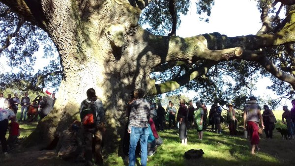Rising tide - gathering with the oak. Photograph by Linda Gordon