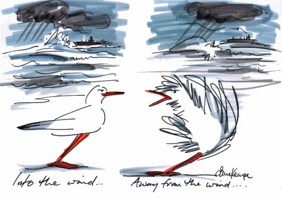 DerekSeagull_into-the-wind