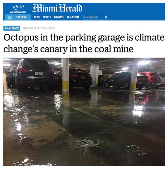octopus-canary-in-coalmine560