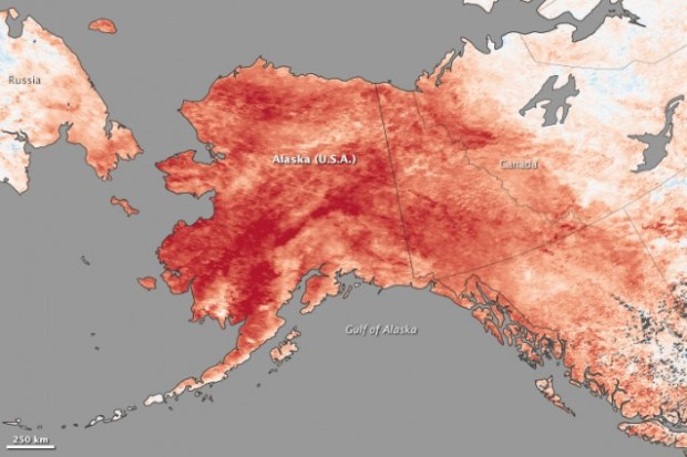 This map depicts land surface temperature anomalies in Alaska for January 23–30, 2014. Based on data from the Moderate Resolution Imaging Spectroradiometer (MODIS) on NASA's Terra satellite, the map shows how 2014 temperatures compared to the 2001–2010 average for the same week. Areas with warmer than average temperatures are shown in red; near-normal temperatures are white; and areas that were cooler than the base period are blue. CREDIT: NASA EARTH OBSERVATORY
