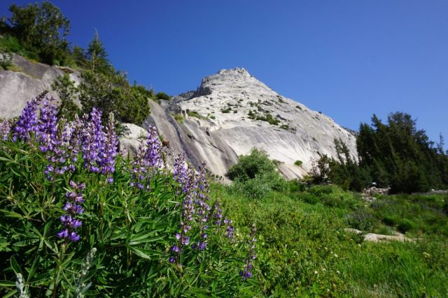 NW Buttress Tenaya Peak