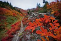 Fall colors near Little Giant Pass