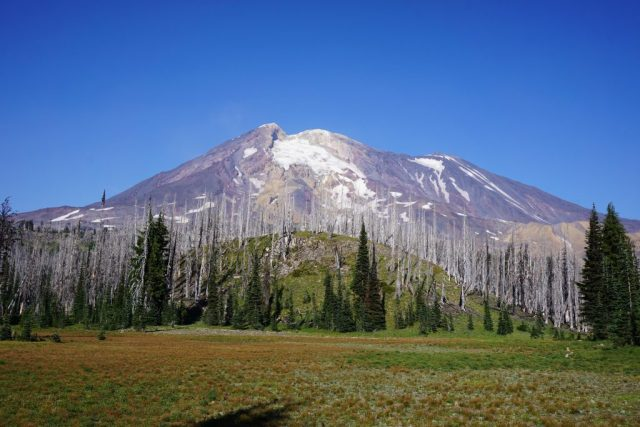 Mt. Adams Meadow