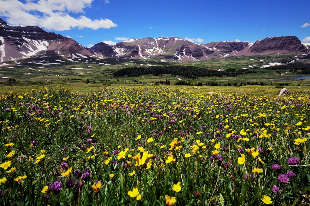 Henry's Fork Meadows