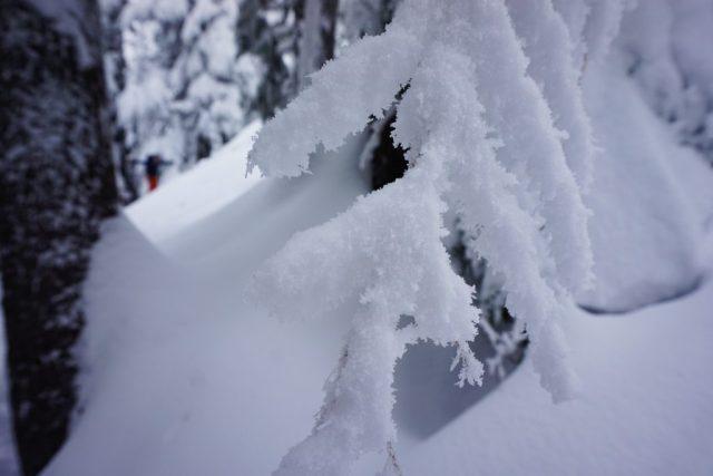 Tree Ice