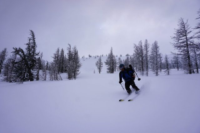 Larch Trees Shred
