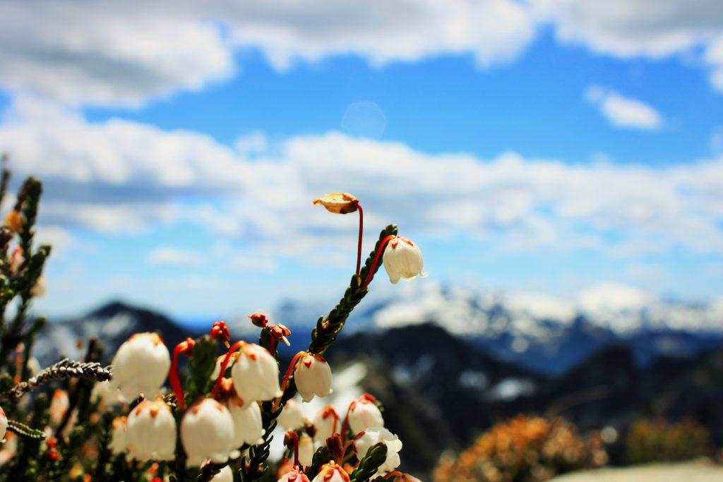 Nimbus Peak Flowers