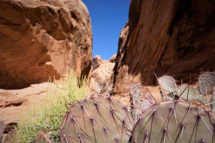 Desert flora.