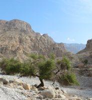 La Princesse a la Dalle, Wadi Naqab, Émirats 41