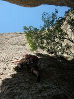 Drac Gos a l'agulle de Can Jorba, Montserrat, Espagne 5