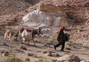 Wadi Tibn, Wadi Sabra, Petra, Jordanie 20