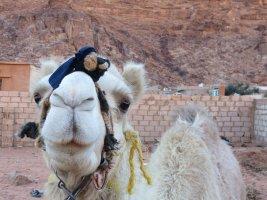 Jebel Mayeen, Wadi Rum, Jordanie 26