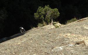 Escabroni Escapullini a la Miranda de Can Jorba, Montserrat, Espagne 4