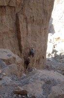 Hell Rock, Wadi Naqab, Émirats 9