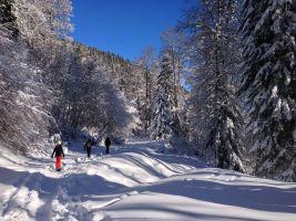 Cagire hivernale, Le Mourtis, Ariège, France 1