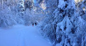 Cagire hivernale, Ariège 7