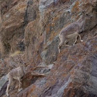 Zinchan, Markha Valley & Zalung Karpo La, Ladakh 4