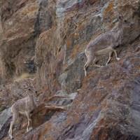 Zinchan, Markha Valley & Zalung Karpo La, Ladakh, Inde 2