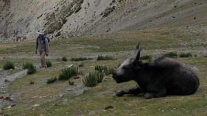 Zinchan, Markha Valley & Zalung Karpo La, Ladakh, Inde 12