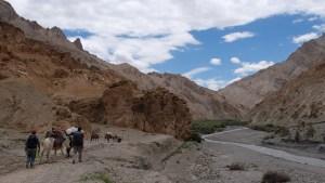 Zinchan, Markha Valley & Zalung Karpo La, Ladakh, Inde 25