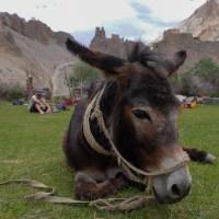 Zinchan, Markha Valley & Zalung Karpo La, Ladakh, Inde 40