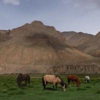 Zinchan, Markha Valley & Zalung Karpo La, Ladakh, Inde 78