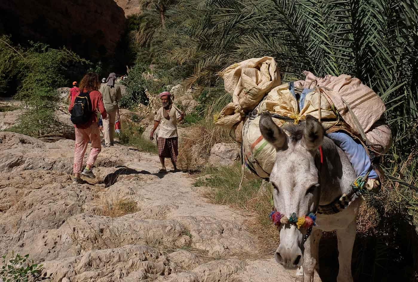 Wadi Shab, Hajar Oriental 9