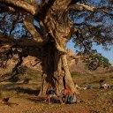 l'arbre gargantuesque