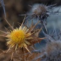Les crêtes de Pinu, Corse 28