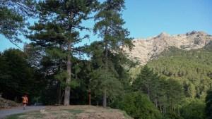 Monte Oro, Vizzanova, Corse 4