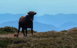 Aiguilles de Bavella & Monte Incudine, Corse 46
