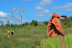 Begidro à Tsimafana, Tsiribihina, Morondava 23