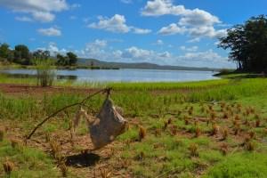 Begidro à Tsimafana, Tsiribihina, Morondava 24