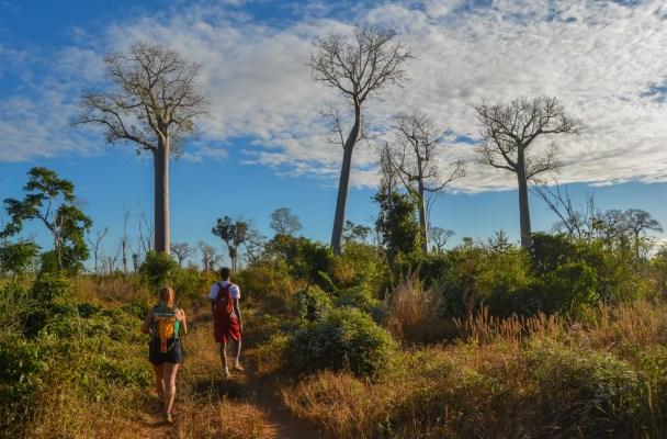 Begidro à Tsimafana, Tsiribihina, Morondava 2