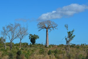 Begidro à Tsimafana, Tsiribihina, Morondava 64