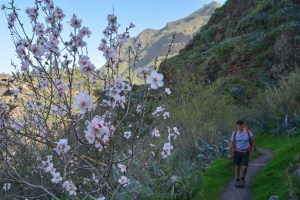 Barranco Agaete & Tamadaba, Gran Canaria 16