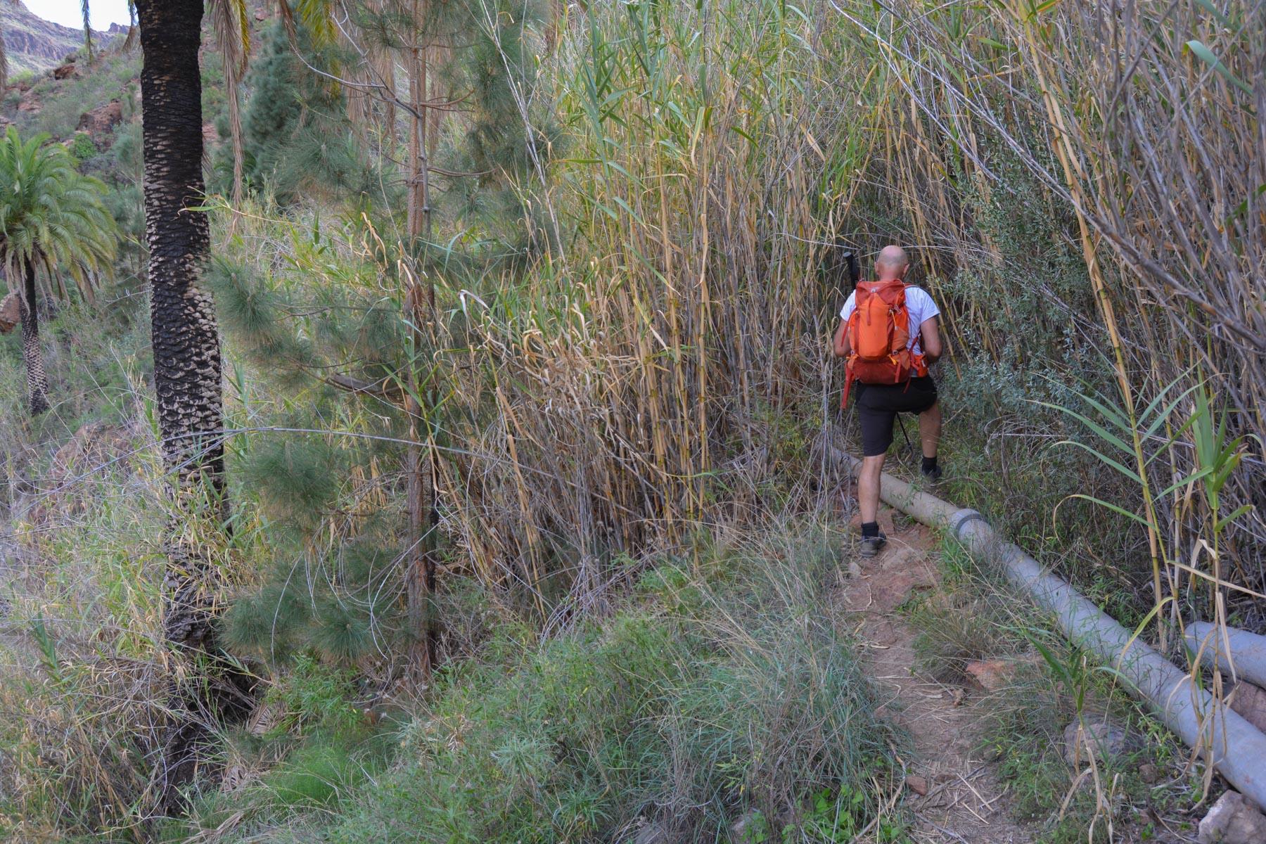 Ayagaures, Gran Canaria, Espagne 39