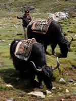 Kala Patthar & Gokyo, Everest 3 pass #3 33