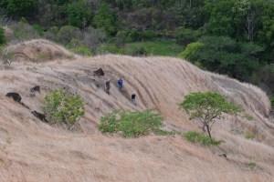 La vallée d'Antongombato, Joffreville 39