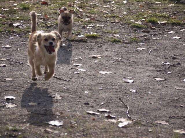 Promenade lac chiens 38 2015-12-13 17h36