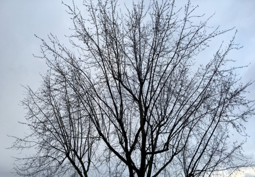 Arbre et mauvais temps